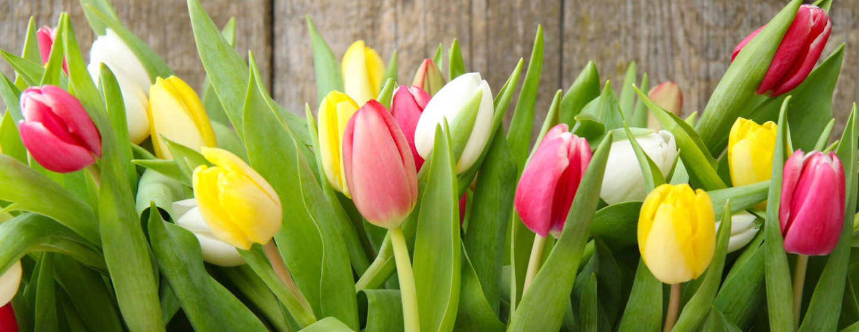 Frühlingsaustellung